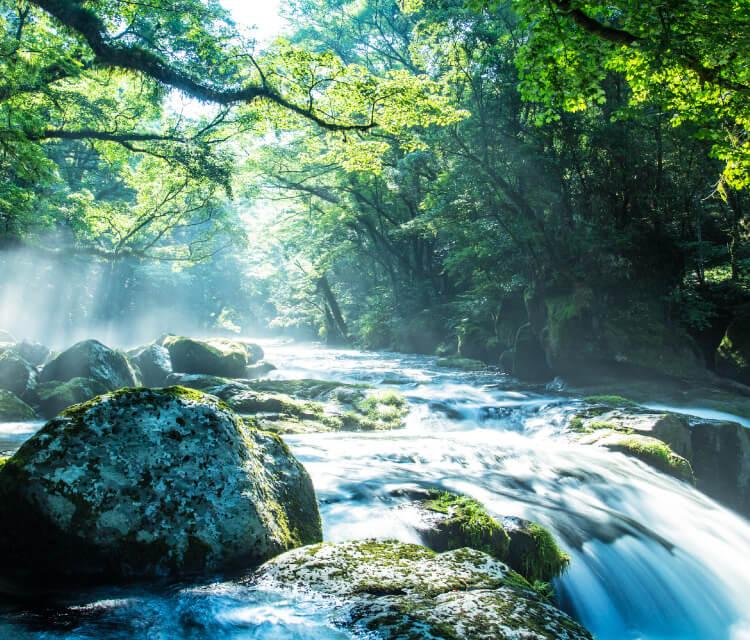 環境と未来を守るSDGs活動